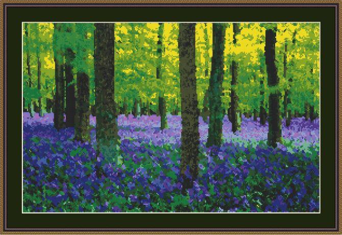 bluebell woods framed